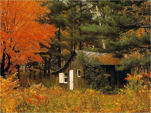 10 tendencias sobre casas pequeñas: forma, función, ecología ...