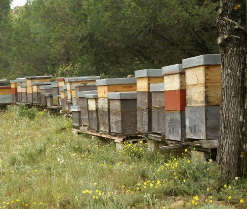 Apicultura urbana 10 colmenas para producir miel en casa